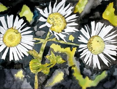 heath aster flower aceo watercolor painting